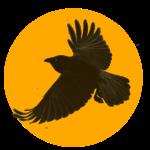 crow solo