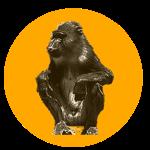 monkey solo