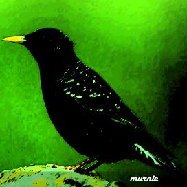 bitter birds sampler avatar