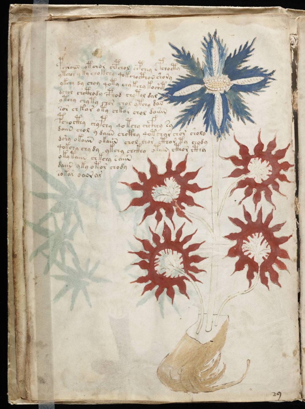 voynich_manuscript_283229